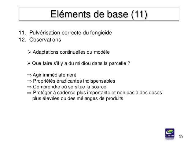 39 Eléments de base (11) 11. Pulvérisation correcte du fongicide 12. Observations  Que faire s'il y a du mildiou dans la ...