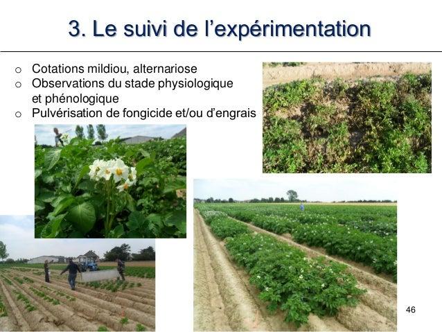 46 3. Le suivi de l'expérimentation o Cotations mildiou, alternariose o Observations du stade physiologique et phénologiqu...