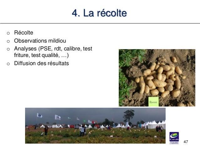 o Récolte o Observations mildiou o Analyses (PSE, rdt, calibre, test friture, test qualité, …) o Diffusion des résultats 4...