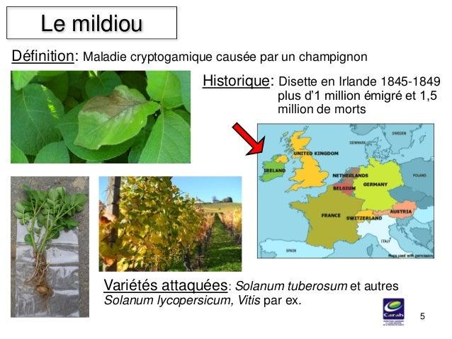 Définition: Maladie cryptogamique causée par un champignon Le mildiou 5 Variétés attaquées: Solanum tuberosum et autres So...