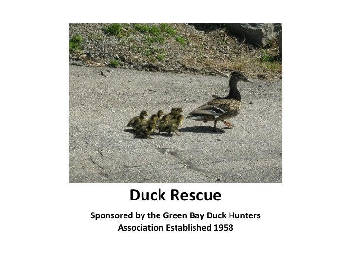 Duck Rescue <ul><li>Sponsored by the Green Bay Duck Hunters Association Established 1958 </li></ul>