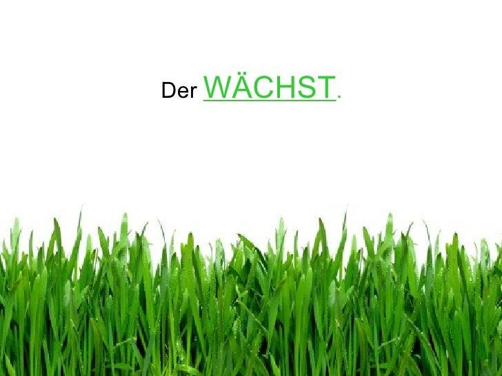 Der  WÄCHST .