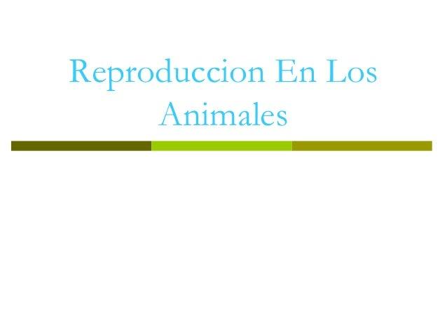 Reproduccion En Los Animales