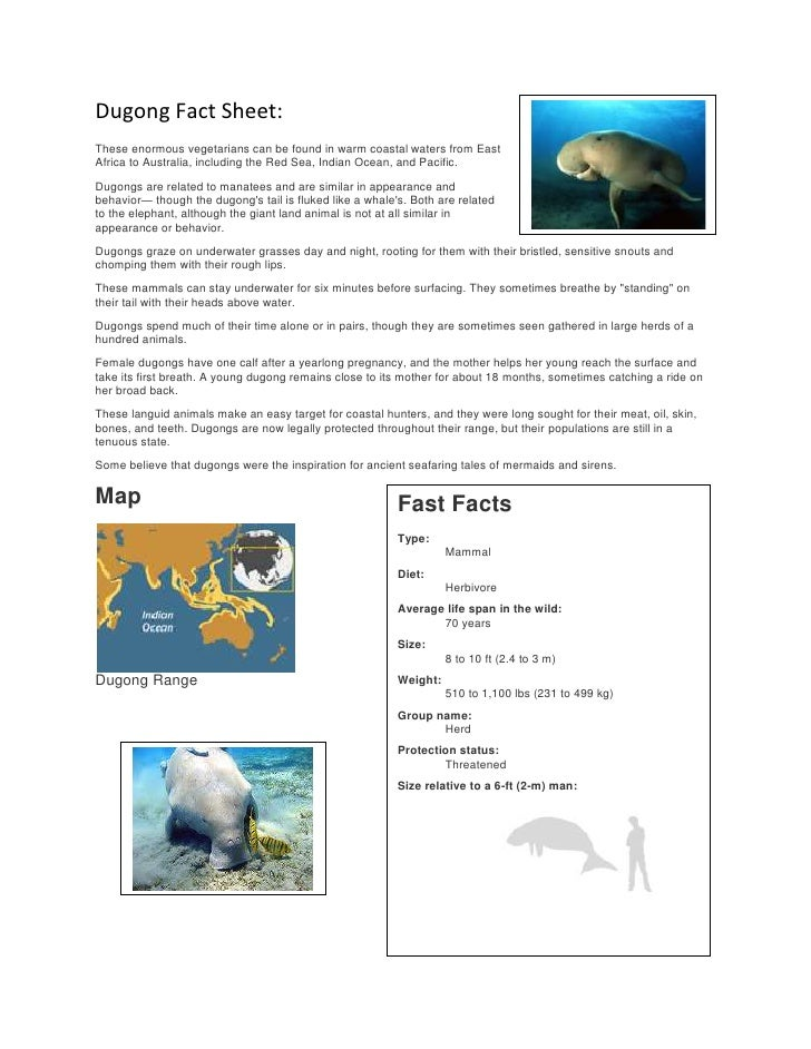 Dugong Fact Sheet:These enormous vegetarians can be found in warm coastal waters from EastAfrica to Australia, including t...