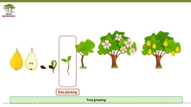 Tree Planting Is Not Tree Growing Cute cartoon boy with shovel. tree planting is not tree growing