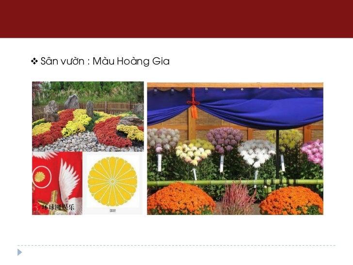  Sân vườn : Màu Hoàng Gia