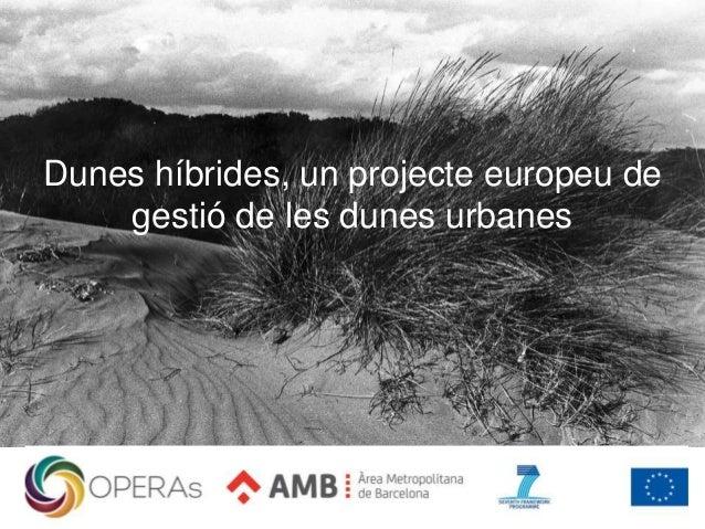 Dunes híbrides, un projecte europeu de gestió de les dunes urbanes