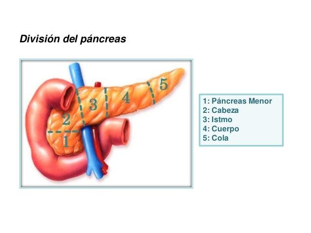 Anatomia Quirurgica Duodeno Páncreas 2015