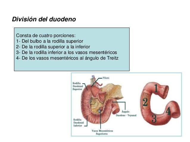 Anatomia Quirurgica del Duodeno Páncreas 2015