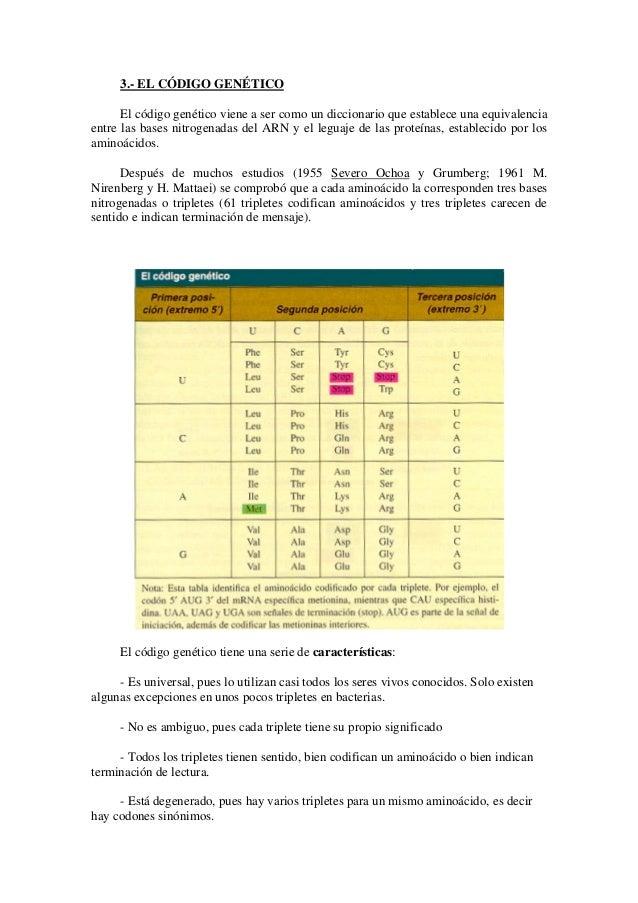 3.- EL CÓDIGO GENÉTICO El código genético viene a ser como un diccionario que establece una equivalencia entre las bases n...