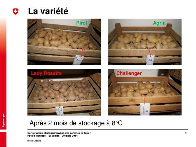 Conservation et pr germination des pommes de terre dupuis brice - Conservation pomme de terre cuite ...