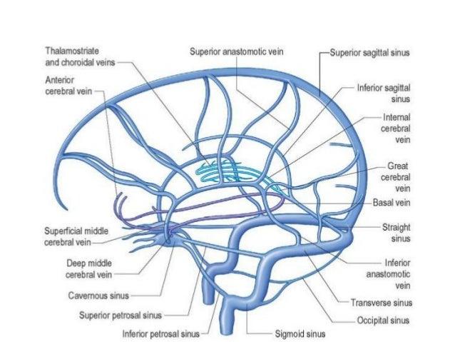 Superior Sagittal Sinus Diagram Trusted Wiring Diagram