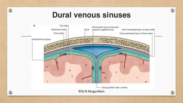 Dural venous sinuses & cavernous sinus - Dr.N.Mugunthan.