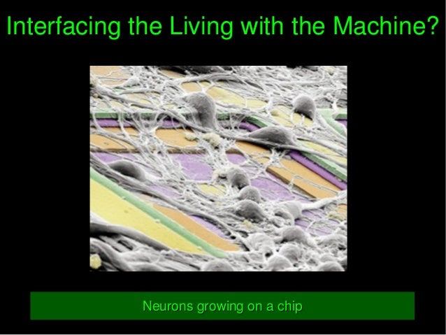 InterfacingtheLivingwiththeMachine?InterfacingtheLivingwiththeMachine? NeuronsgrowingonachipNeuronsgrowing...