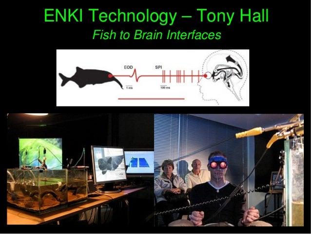 ENKITechnology–TonyHallENKITechnology–TonyHall FishtoBrainInterfacesFishtoBrainInterfaces