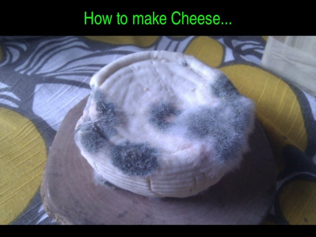 HowtomakeCheese...