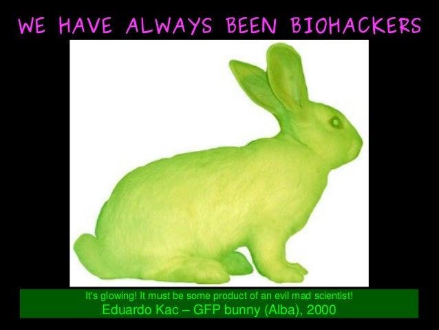It'sglowing!Itmustbesomeproductofanevilmadscientist! EduardoKac–GFPbunny(Alba),2000 WE HAVE ALWAYS BE...