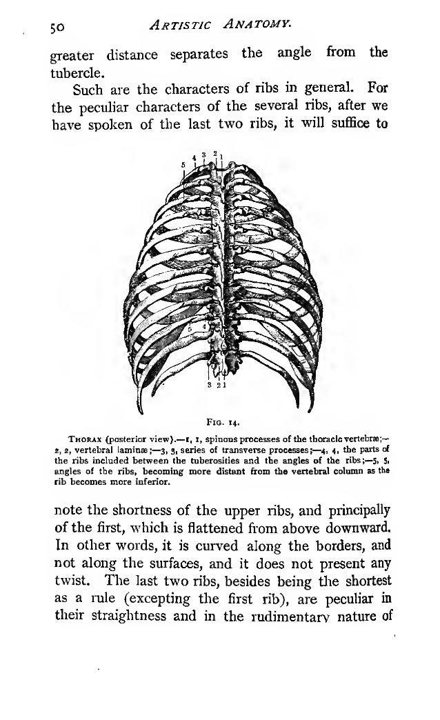 Duval's artisticanatomy(1852)