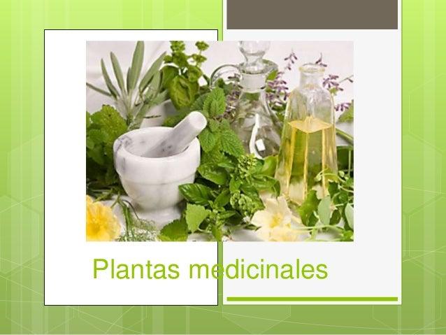 Plantas medicinales para power point - Etiquetas para plantas ...