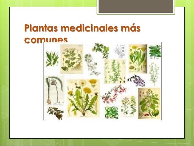 Plantas Medicinales Para Power Point