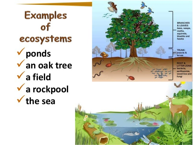 biology dynamic ecosystem These studies have demonstrated that grassland restorations are dynamic  ecosystems belowground, with continual increases in total soil carbon and rapid .