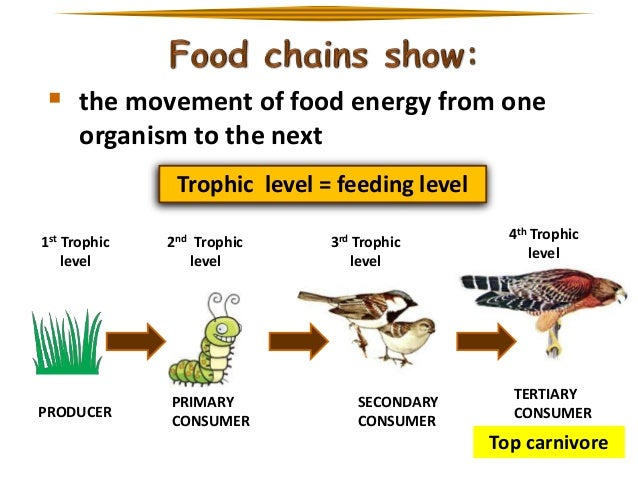 Which Organism Is Part Of The Detritus Food Chain