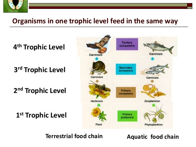 Biology Form 4 Chapter 8 Dynamic Ecosystem Part 1