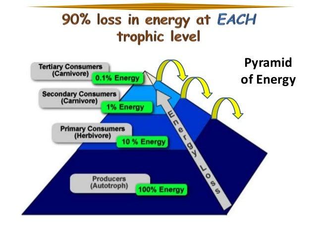 ap biology trophic levels essay