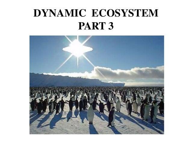 DYNAMIC ECOSYSTEM PART 3 Part 2