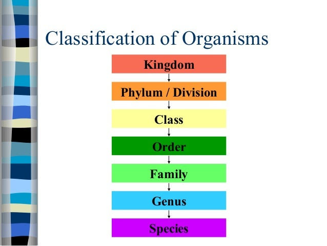 BIOLOGY FORM 4 CHAPTER 8 - DYNAMIC ECOSYSTEM PART 4