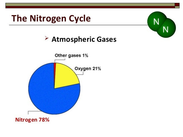 Nitrogen cycle essay