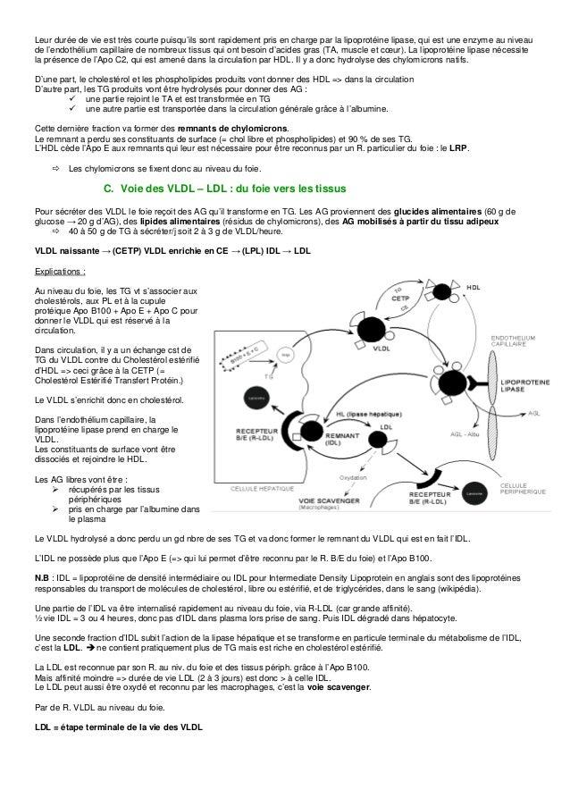 Dyslipoprotéinémies Slide 3