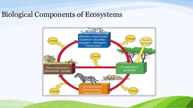 Ecosystem Presentation Amity International Business School