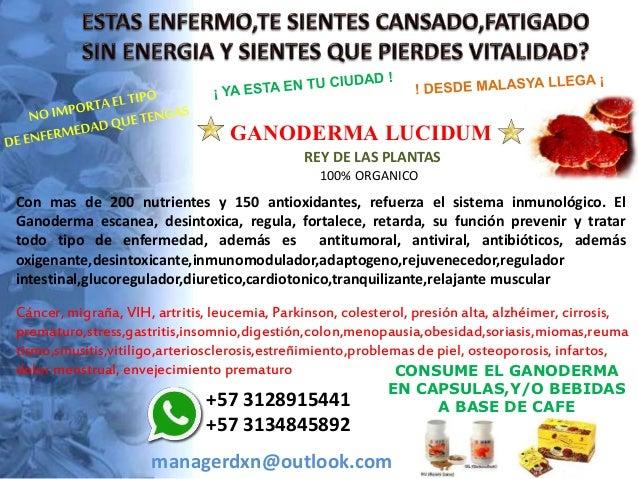 GANODERMA LUCIDUM REY DE LAS PLANTAS 100% ORGANICO Con mas de 200 nutrientes y 150 antioxidantes, refuerza el sistema inmu...