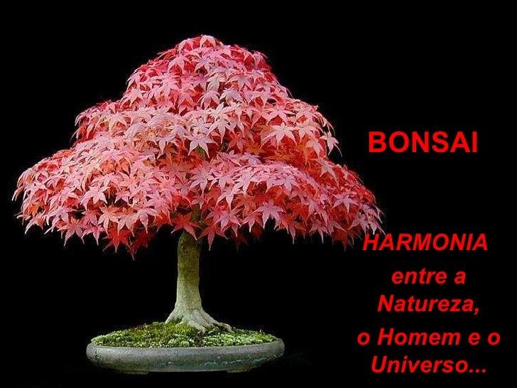 BONSAI HARMONIA  entre a Natureza, o Homem e o Universo...