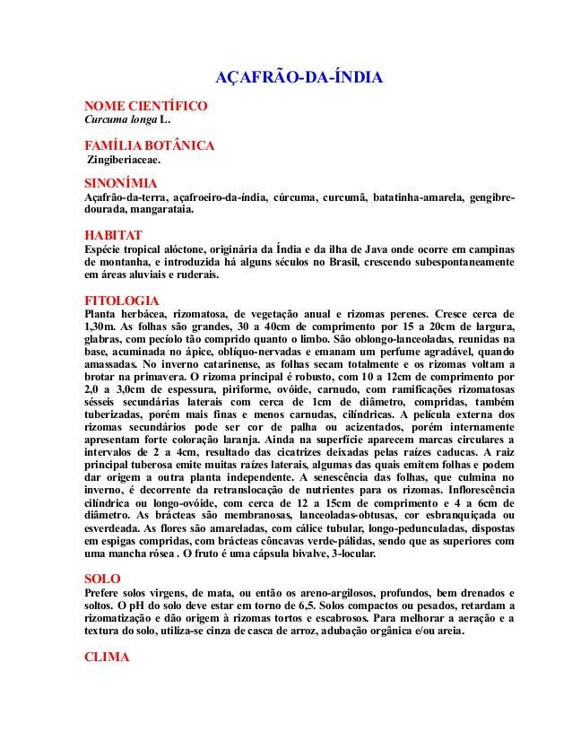 AÇAFRÃO-DA-ÍNDIA NOME CIENTÍFICO Curcuma longa L. FAMÍLIA BOTÂNICA Zingiberiaceae. SINONÍMIA Açafrão-da-terra, açafroeiro-...