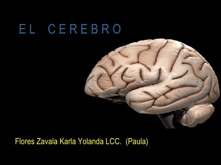 E L  C E R E B R O <ul><li>Flores Zavala Karla Yolanda LCC.  (Paula) </li></ul>