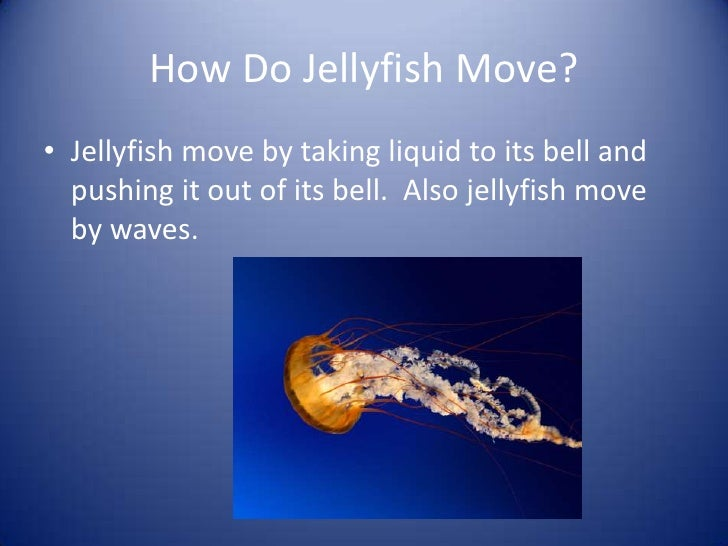 How Does a Jellyfish Move? | Reference.com