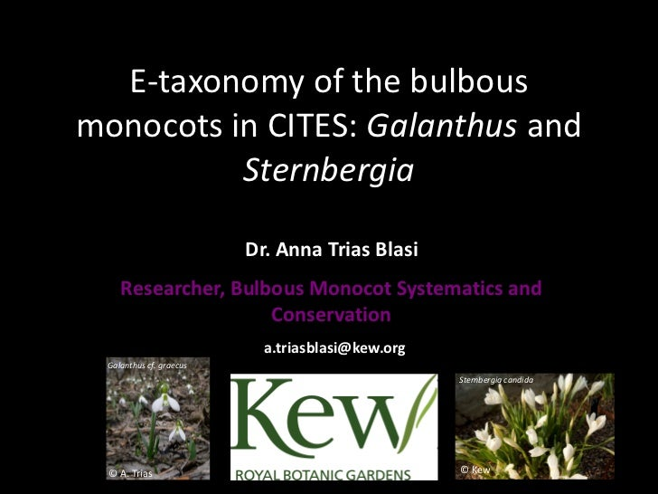 E-taxonomy of the bulbousmonocots in CITES: Galanthus and          Sternbergia                          Dr. Anna Trias Bla...