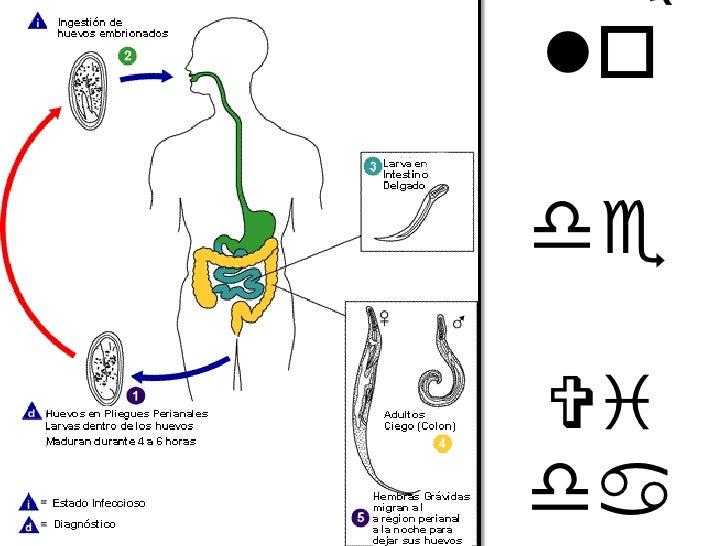 antes y despues ciclo esteroides