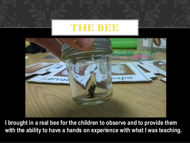 THE BEE I brought in a real bee for the children to observe and to provide them with the ability to have a hands on experi...