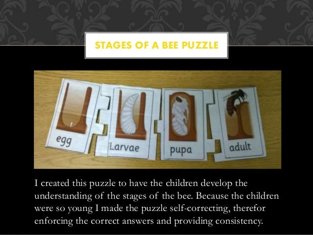 STAGES OF A BEE PUZZLE I created this puzzle to have the children develop the understanding of the stages of the bee. Beca...