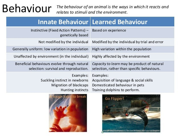 innate vs learned behaviour Instincts/innate behaviour is the type of  what are some examples of innate  and note which behaviors are innate and which are learned innate:.