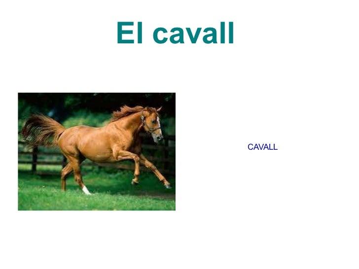 El cavall  CAVALL
