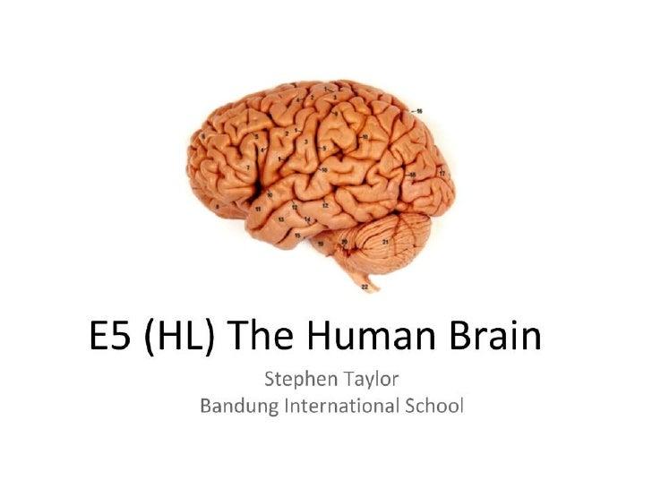 E5 (HL) The Human Brain