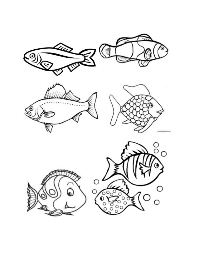 Smart with Art: Fish Examples Reference Sheet