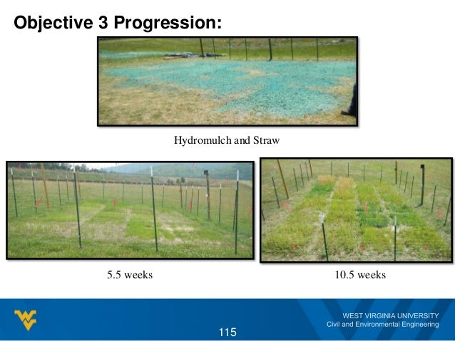 Objective 3 Progression: Hydromulch and Straw 5.5 weeks 10.5 weeks 115