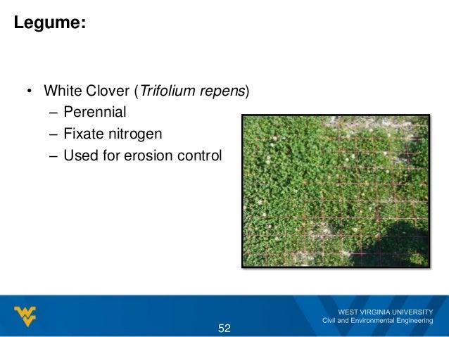 Legume: • White Clover (Trifolium repens) – Perennial – Fixate nitrogen – Used for erosion control 52