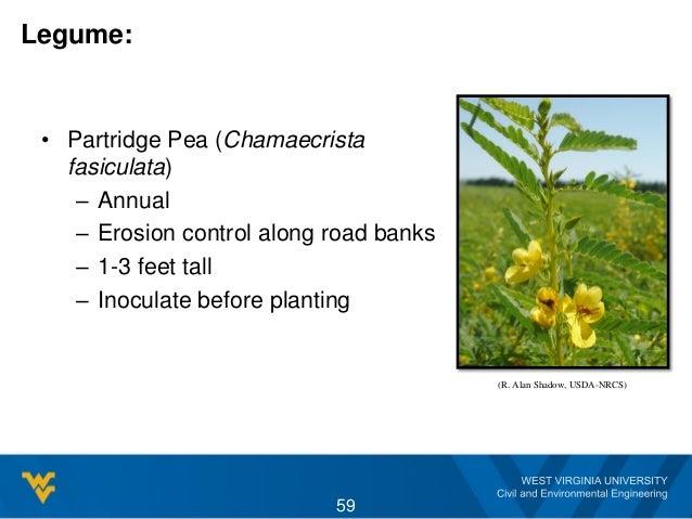 Legume: • Partridge Pea (Chamaecrista fasiculata) – Annual – Erosion control along road banks – 1-3 feet tall – Inoculate ...