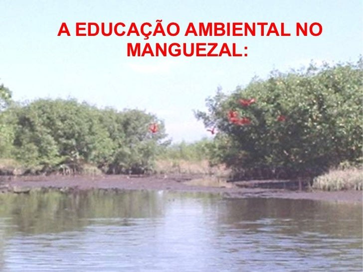 <ul>A EDUCAÇÃO AMBIENTAL NO MANGUEZAL:  </ul>